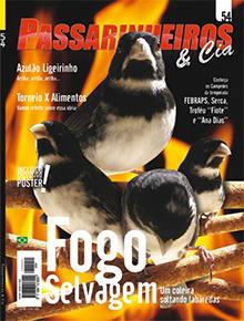 Edição 54